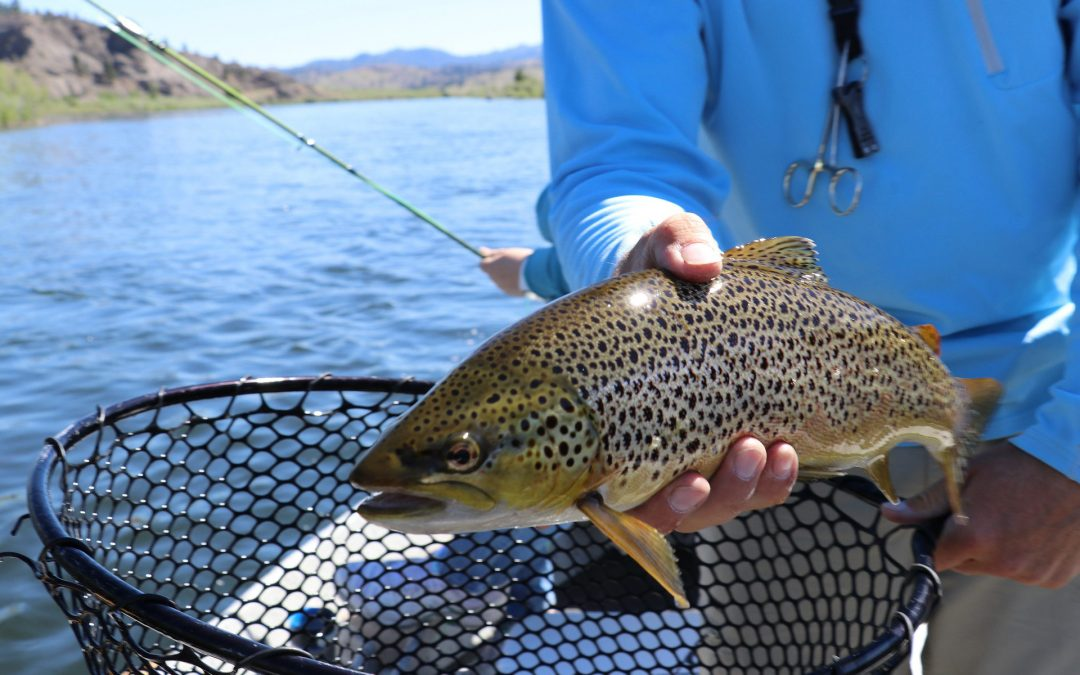 Pêche à la truite en ruisseau et lac